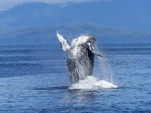 animal-nature-ocean-51964.jpg
