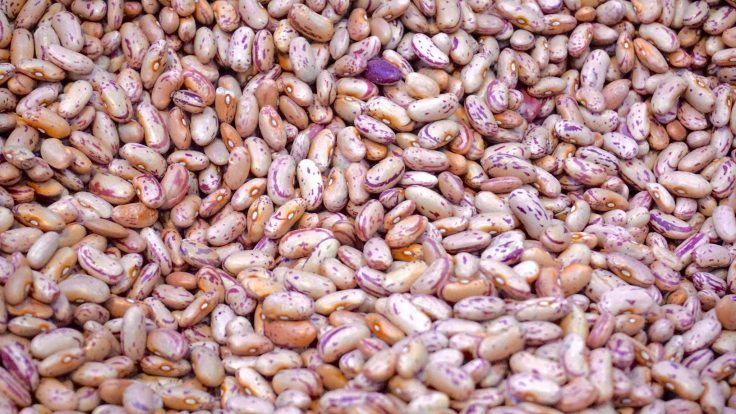agriculture-beans-close-up-176169